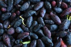 Achtergrond van blauwe bessenkamperfoelie stock foto's