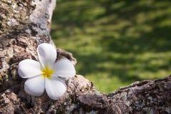 Achtergrond van bloem op boom Stock Foto