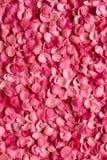 Achtergrond van bloemblaadjes Royalty-vrije Stock Afbeeldingen