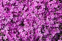 Achtergrond van bloemen Royalty-vrije Stock Foto's