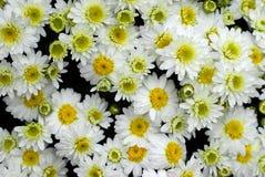 Achtergrond van bloemen Stock Foto's