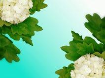 Achtergrond van bloemen Stock Fotografie