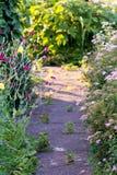 Achtergrond van bloemen die in een Tuin tot bloei komen Royalty-vrije Stock Afbeeldingen