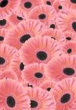 Achtergrond van bloemen Gerber. Stock Afbeeldingen