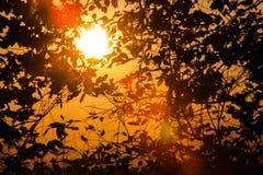 Achtergrond van boomtakken Royalty-vrije Stock Foto's