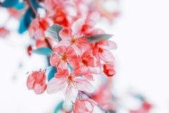 Achtergrond van de aard de mooie bloemenpastelkleur stock afbeeldingen