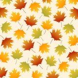 Achtergrond van de bladeren van de esdoornherfst Stock Afbeelding