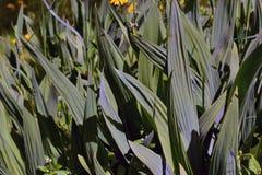Achtergrond van de bladeren van de tuininstallaties Stock Foto