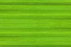 Achtergrond van de bladeren van het korfgras Stock Fotografie