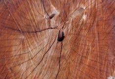 Achtergrond van de boom de houten oude textuur Royalty-vrije Stock Foto
