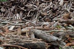 Achtergrond van de boom de houten oude textuur Royalty-vrije Stock Foto's