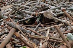 Achtergrond van de boom de houten oude textuur Stock Afbeelding