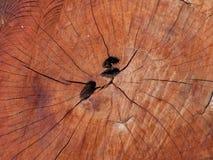 Achtergrond van de boom de houten oude textuur Stock Fotografie