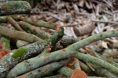 Achtergrond van de boom de houten oude textuur Royalty-vrije Stock Afbeeldingen