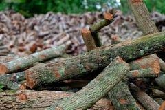 Achtergrond van de boom de houten oude textuur Stock Foto