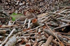 Achtergrond van de boom de houten oude textuur Royalty-vrije Stock Afbeelding