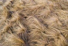 Achtergrond van de bundels van droog geel gras Stock Foto's