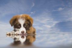 Achtergrond van de de hond de blauwe hemel van het puppy stock foto