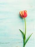Achtergrond van de de tulpen de bloemen minimale pastelkleur van de lentepasen royalty-vrije stock foto