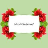 Achtergrond van de de verse bloemen en plaats die van badstofrozebottels wordt gemaakt voor Stock Afbeelding