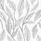 Achtergrond van de grijze schets van het lijnblad Royalty-vrije Illustratie