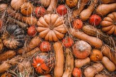 Achtergrond van de herfst gele, oranje pompoenen royalty-vrije stock foto's