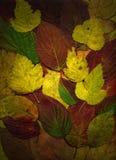 Achtergrond van de herfstbladeren Stock Foto