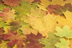 Achtergrond van de herfstbladeren. Royalty-vrije Stock Fotografie