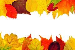 Achtergrond van de herfstbladeren Royalty-vrije Stock Afbeelding