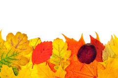 Achtergrond van de herfstbladeren Stock Afbeelding
