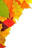 Achtergrond van de herfstbladeren Royalty-vrije Stock Foto