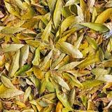 Achtergrond van de herfstbladeren De herfst royalty-vrije stock fotografie