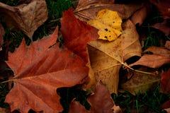 Achtergrond van de herfstbladeren royalty-vrije stock fotografie