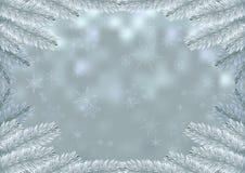 Achtergrond van de het kadersneeuw van de Kerstmis de witte spar Stock Afbeeldingen