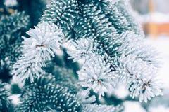 Achtergrond van de Kerstmis de altijdgroene boom van de de wintervorst Het ijs behandelde blauwe nette tak dichte omhooggaand Fro royalty-vrije stock afbeelding
