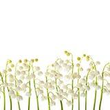 Achtergrond van de lelietje-van-dalen de bloemen geïsoleerde grens Royalty-vrije Stock Afbeeldingen