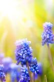 Achtergrond van de lentebloemen van de kunst de mooie stock foto's