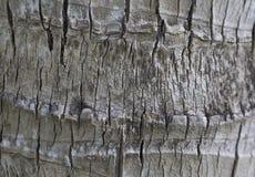 Achtergrond van de schors van een boom Stock Afbeeldingen