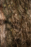 Achtergrond van de textuur van de boom Royalty-vrije Stock Afbeeldingen