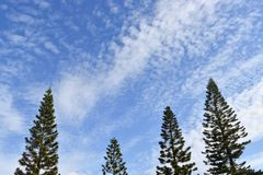 Achtergrond van de de winter de blauwe hemel met pijnboombomen royalty-vrije stock afbeelding