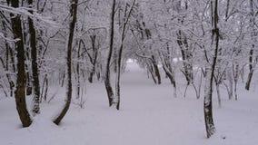 Achtergrond van de Winterbos met Snow-covered Takkenbomen stock videobeelden