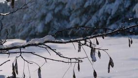Achtergrond van de Winterbos met Snow-covered Takkenbomen stock footage