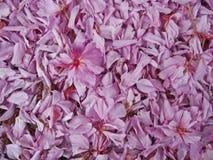 Achtergrond van de zachte roze bloemblaadjes van de kersenbloesem stock afbeeldingen