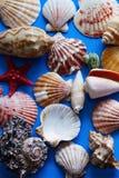 Achtergrond van diverse shells stock afbeeldingen
