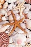 Achtergrond van diverse zeeschelpen en zeesterren Stock Foto's