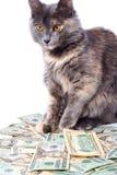 Achtergrond van dollars stock afbeeldingen