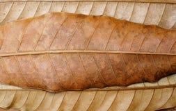 Achtergrond van droge bruine bladeren Stock Afbeeldingen