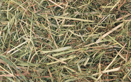 Achtergrond van droog gras Stock Foto