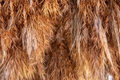 Achtergrond van droog gras van gouden kleur stock fotografie