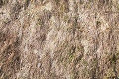 Achtergrond van droog gras op de helling in de vroege lente achtergronden royalty-vrije stock foto's